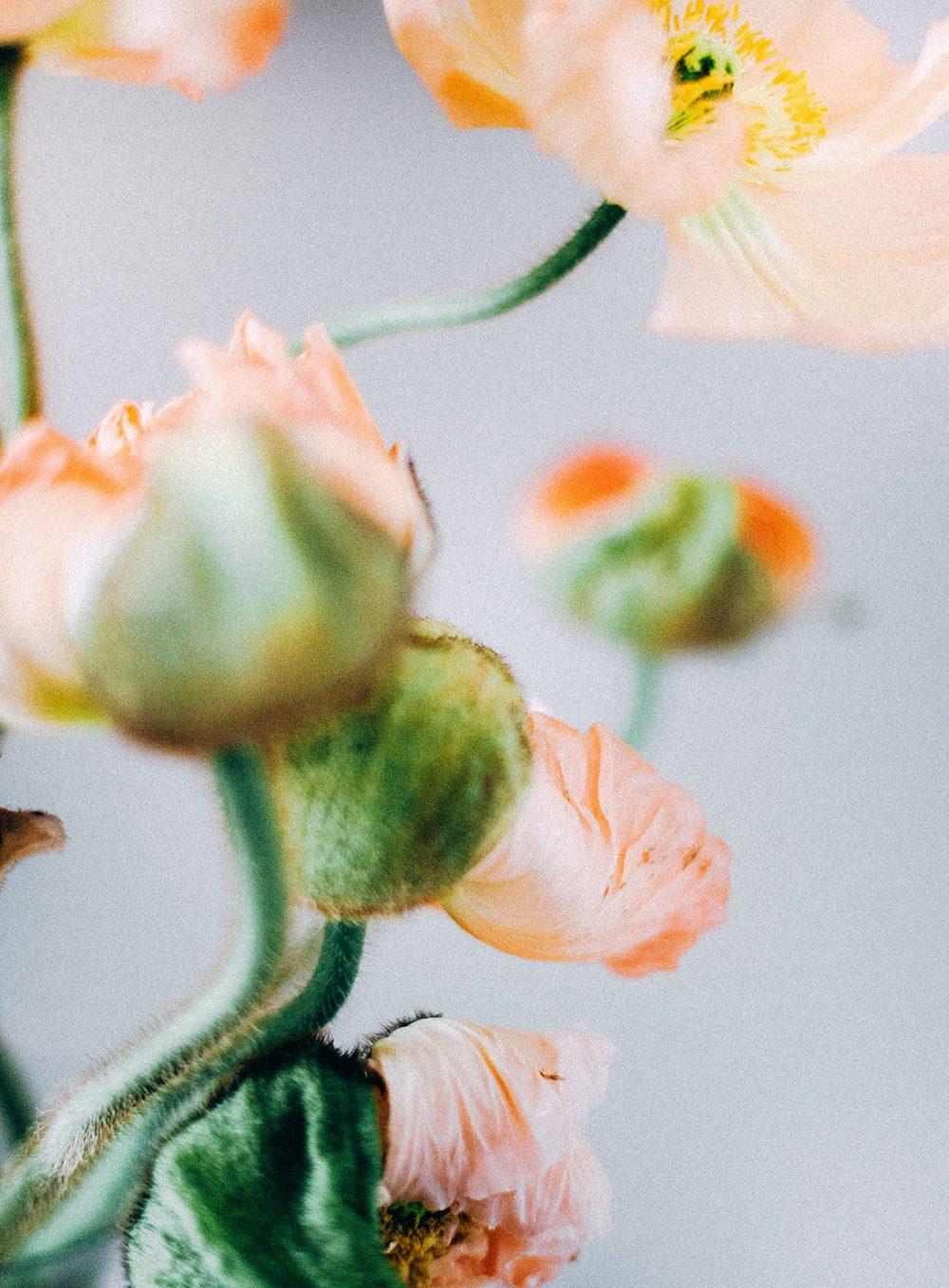 Blumendetail Mohn Apricot Peach Orange Hochzeitsdekoration Fine Art Photography Tabea Maria-Lisa