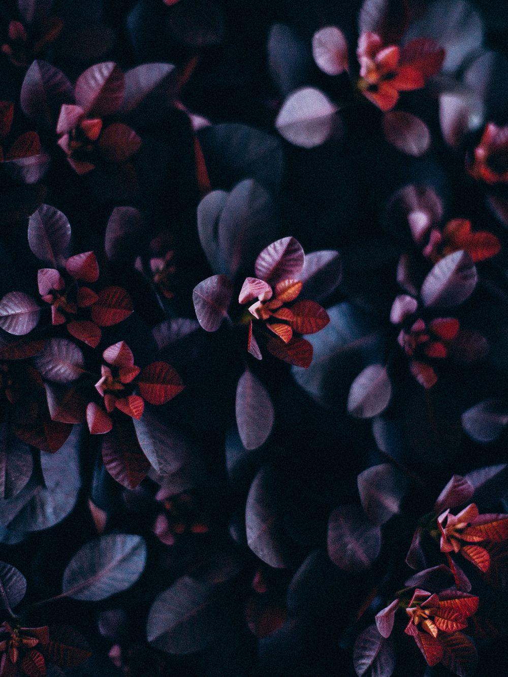 Blumendetail moody Tabea Maria-Lisa Hochzeitsfloristin